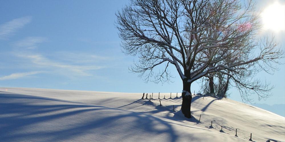 winter-backdrops