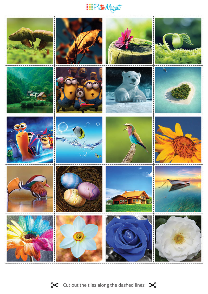 PicToMagnet photo magnets variety