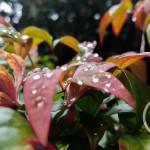 dewdrops by Clarke Morley