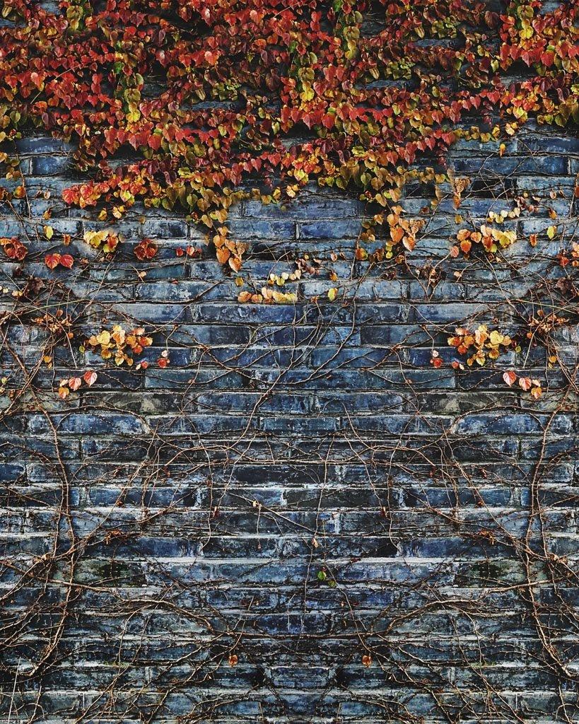 backdrop store brick vines