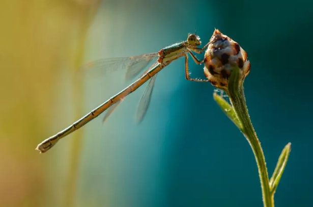 capturing images of small subjects